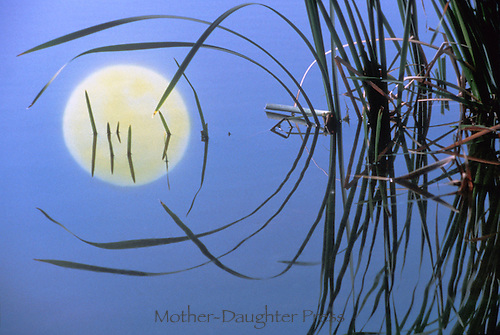 Mood and reeds reflected in night time water, dusk, Missouri USA