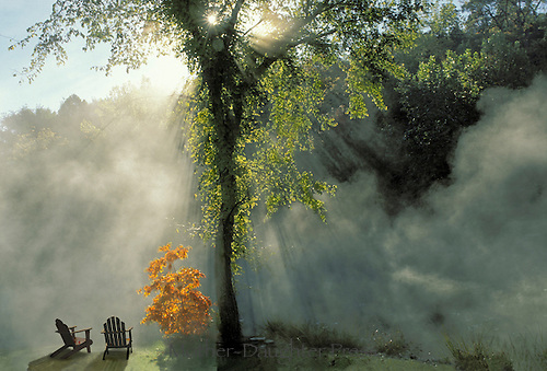 Two chairs watch the sunlight break through the mist rising off the lake next to an orange sassafrass tree, Midwest USA