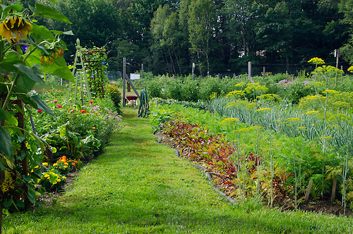 Yarmouth community Garden, Yarmouth Maine, USA