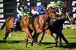 OLDSMAR, FL - MARCH 11: Fifty Five #6, ridden by Jose Ortiz (black hat), just beats out La Coronel #5, ridden by Florent Geroux, to win the Florida Oaks on Tampa Bay Derby Day at the Tampa Bay Downs on  March 11, 2017 in Oldsmar, Florida. (Photo by Douglas DeFelice/Eclipse Sportswire/Getty Images)