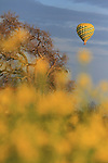Hot air balloon sail over mustards fields of Napa Valley, CA.