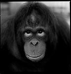 Indonesia's Endangered Animals