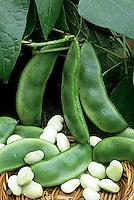 HS30-014b  Bean - lima bean -Fordhook variety