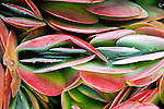 MANHATTAN BEACH, CA: Plants ©Radhika Chalasani