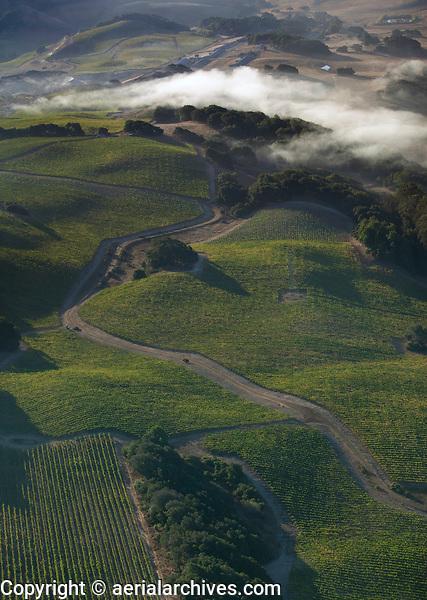 aerial photograph of fog on Sonoma Mountain, Petaluma, Sonoma county, California