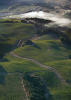 aerial photograph of fog on Sonoma Mountain, Petaluma, Sonoma county, California