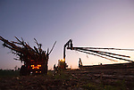 Log truck loading Southern Pine Trees, early morning