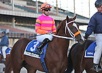 6 March 2010: Nacho Friend and jockey Joe Bravo go to the post for The Gotham at Aqueduct Racetrack in Ozone Park NY.