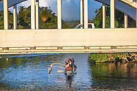 Local men paddling a canoe on Anahulu Stream under the bridge in Haleiwa, O'ahu.