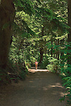 Hiker on trail through forest at Oswald West State Park, Oregon Coast..#06061851
