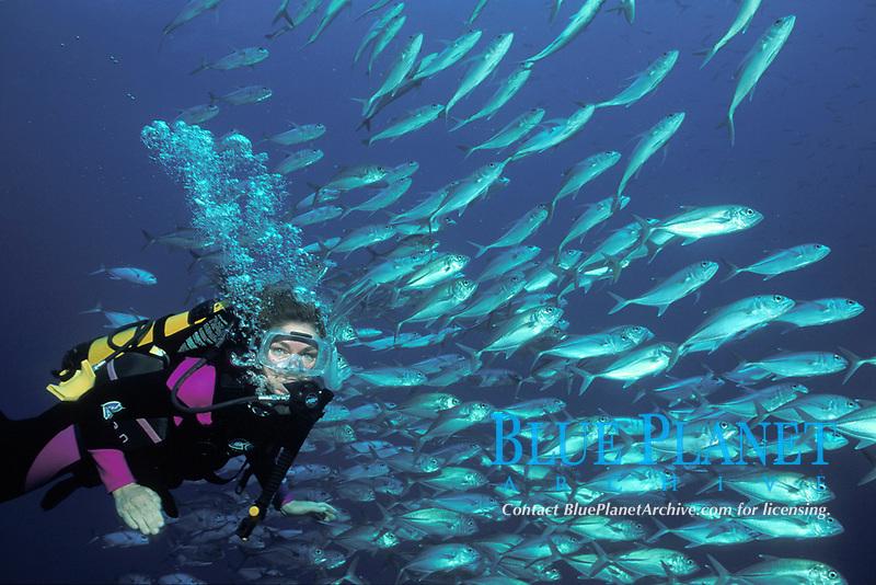 Coral Sea/Spoil Sport, trevally school, model released