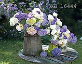 Interlitho, FLOWERS, BLUMEN, FLORES, photos+++++,KL16444,#f#