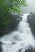 Upper Whiteoak Falls with a heavy spring flow, Shenandoah National Park, Virginia