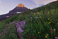 Mount Reynolds and alpine tundra with wildflowers, Leafy Arnica, Pink Monkeyflower, Logan Pass, Glacier National Park, Montana, USA, July 2007