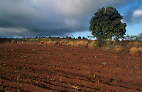 Red Dirt, Kauai, Hawaii, USA