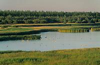 Katinger Watt, Blick vom Seedeich aus über die Teichflächen, Schilfgebiet, Nordsee, Schleswig-Holstein