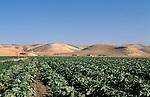 Jordan, agriculture in the Jordan Valley<br />
