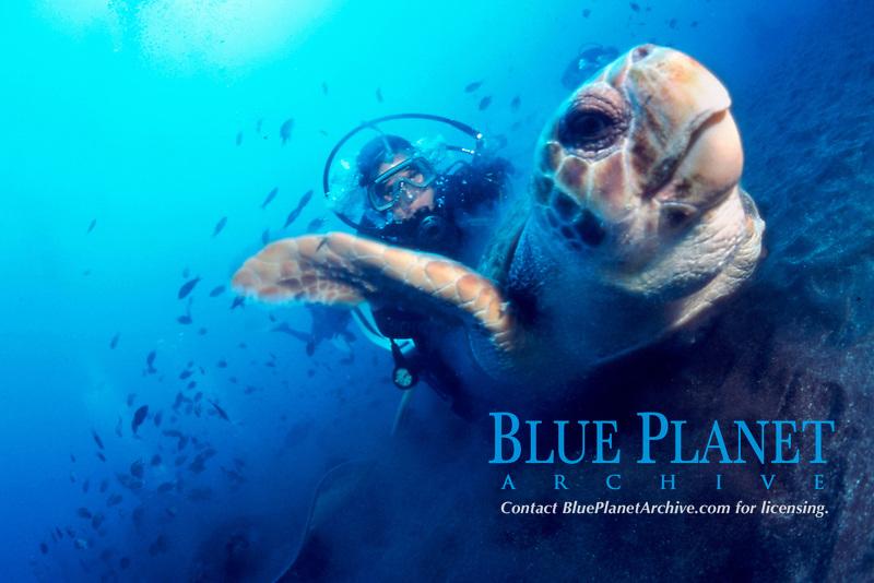diver and loggerhead sea turtle, Caretta caretta, Tenerife, Canary Islands, East Pacific Ocean