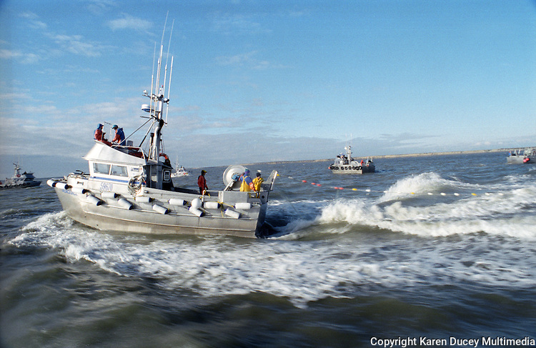 Alaska commercial fishermen make a set in Bristol Bay using gillnets to catch sockeye salmon. (© Karen Ducey Photography)