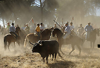 The bull is tormented in the 'El toro de la Vega' (The bull of the plain) bullfight, on September 16, 2008 in Tordesillas, near Valladolid, © Pedro ARMESTRE.