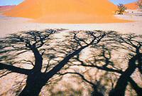 Natura in Namibia: dune di Sossuslvei Ombre di alberi