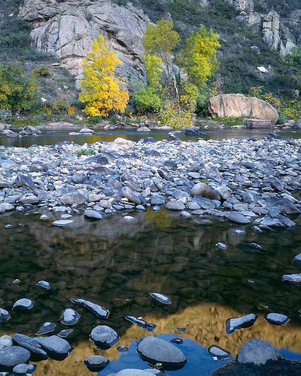 Fall color along the Cache la Poudre River; Roosevelt National Forest, CO