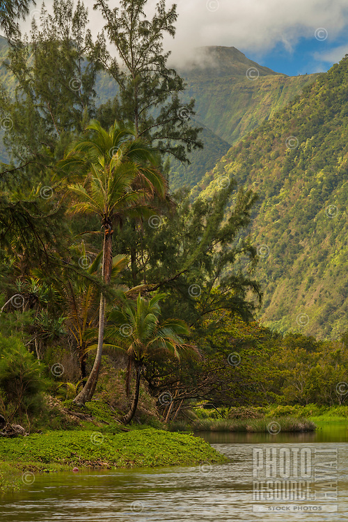 A peaceful pause near palm trees along the Waipi'o Valley Stream on the Big Island of Hawai'i.