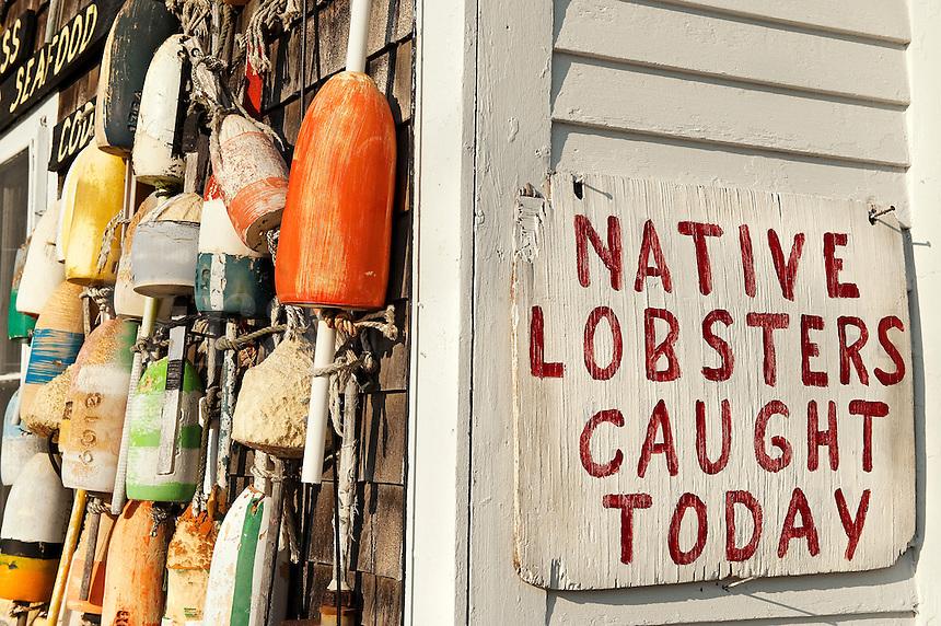 Fresh lobster, Cape Cod, MA, USA