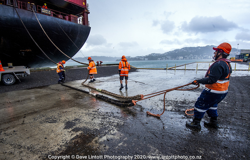 Port staff tie off the MSC Banu container ship at CentrePort  in Wellington, New Zealand on Saturday, 18 April 2020. Photo: Dave Lintott / lintottphoto.co.nz