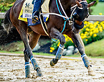 October 2, 2020: Jesus' Team exercises as horses prepare for the Preakness Stakes at Pimlico Race Course in Baltimore, Maryland. Scott Serio/Eclipse Sportswire/CSM