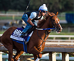 October 26, 2014:  Tapiture, trained by Steve Asmussen, exercises in preparation for the Breeders' Cup Dirt Mile at Santa Anita Race Course in Arcadia, California on October 26, 2014. Scott Serio/ESW/CSM