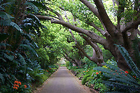 The Path of Livingstone in Kirstenbosch Botanical Gardens, Cape Town