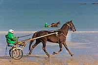 France, Côtes-d'Armor (22), Côte d'Emeraude, Lancieux: Trotteurs à l'entrainement sur la plage de Saint-Sieux //  France, Brittany, Cotes-D'Armor,  Emeraude coast , Lancieux:   Horses in training on Saint-Sieux beach