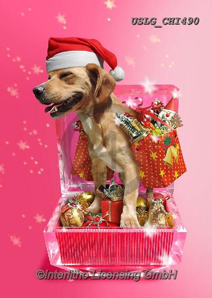 CHIARA,CHRISTMAS ANIMALS, WEIHNACHTEN TIERE, NAVIDAD ANIMALES, paintings+++++,USLGCHI490,#XA# ,funny ,funny