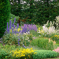 Pale pink and purple delphiniums grow in a packed bed in the two acre grounds of Clare College Fellows' garden in the centre of Cambridge