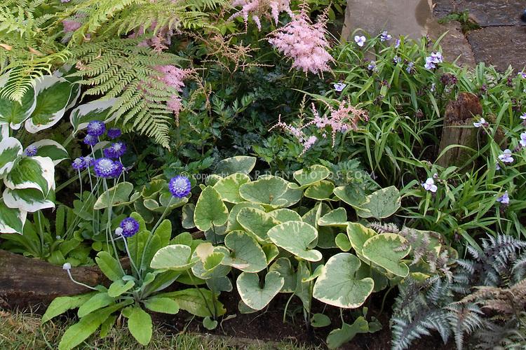 Brunnera 'Hadspen Cream' with Hosta, ferns, Astilbe, Athyrium nipponicum var pictum, Tradescantia, and other shade plants