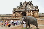 old ,temple ,india ,Brihadishwara ,Temple, at, Thanjavur ,Tanjore region, elephant ,being prepared to give blessing ,blessing