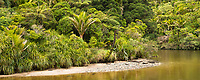 Pororari River and native forest in Punakaiki, Paparoa National Park, Buller Region, West Coast, New Zealand, NZ