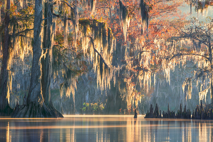 For a few moments after the sun rises, the first light of day filters through the moss and foggy waters of Louisiana's swamplands.