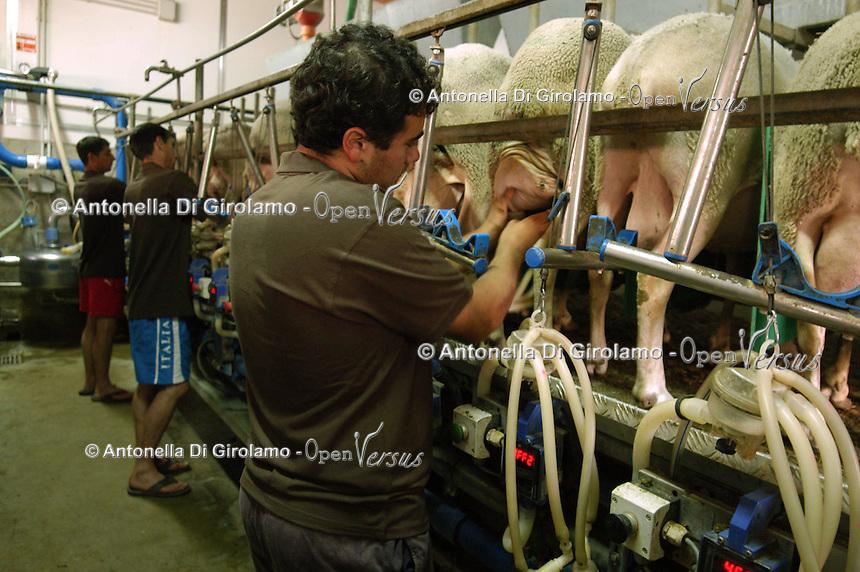 """Azienda Agricola Martinelli. L'azienda ha sede in Abruzzo nel Parco Nazionale Gran Sasso e Monti della Laga. .Caseificio per la produzione del """"Pecorino di Farindola"""". L' azienda dispone di una superficie di oltre 240 ettari di terreni destinati alle coltivazioni biologiche ed agli allevamenti zootecnici con oltre 1200 capi ovini e oltre 300 bovini di razza marchigiana..Martinelli Farm. The company is based in Abruzzo the National Park Gran Sasso and Monti della Laga. .Dairy Factory for the production of cheese """"Pecorino di Farindola""""..The company has an area of more than 240 hectares of land for crops and biological livestock farms with more than 1200 heads of sheep and beyond 300 cattle race Marchighiana.."""