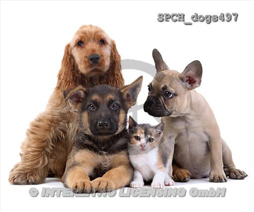 Xavier, ANIMALS, dogs, photos(SPCHdogs497,#A#) Hunde, perros