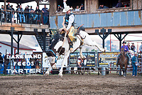 18-Darby Broncs and Barrels