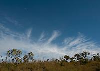 Yanchep National Park, Australia.