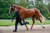 AUS-Stephen Way presents Congress Master during the CCI-L 2* First Horse Inspection. 2021 GBR-Saracen Horse Feeds Houghton International Horse Trials. Hougton Hall. Norfolk. England. Wednesday 26 May 2021. Copyright Photo: Libby Law Photography