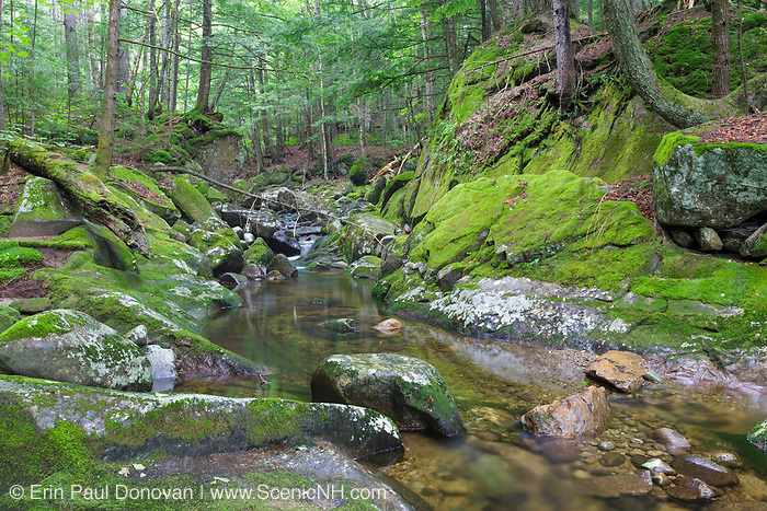 A small gorge area covered in moss along Walker Brook in Woodstock, New Hampshire during the summer months.