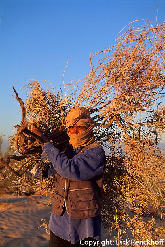 Tunesien, Duenen bei Douz, Sammeln von Brennholz  in der Wüste