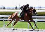 01 April 2010.  Hip #81 Speightstown - North Lake Jane filly.