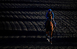 November 2, 2020: Sealiway, trained by trainer Frederic Rossi, exercises in preparation for the Breeders' Cup Juvenile Turf at Keeneland Racetrack in Lexington, Kentucky on November 2, 2020. Alex Evers/Eclipse Sportswire/Breeders Cup