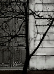 Paris, Tree Shadow, Baumschatten, Baum, 10.04.2014<br /> <br /> <br /> <br /> <br /> ***HIGHRES AUF ANFRAGE*** ***VOE NUR NACH RUECKSPRACHE***<br />  ***Keine Social_Media Nutzung***<br /> <br /> Engl.: Europe, France, Paris, Tree Shadow, shadows, trees, tree, door, house wall, facade, 10 April 2014<br /> ***HIGHRES ON REQUEST***PUBLICATION ONLY AFTER CONSULTATION WITH LAIF***<br /> ***No social media use***