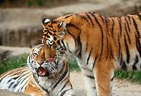 Wildlife and big animals